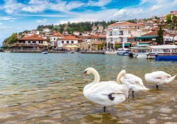 Ohrid in beeld met zwanen op de achtergrond